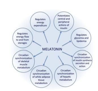 ciclo melatonina 2
