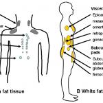Menos carboidratos e mais sono para perder peso