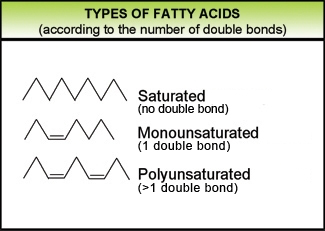 fatty_acids_EN